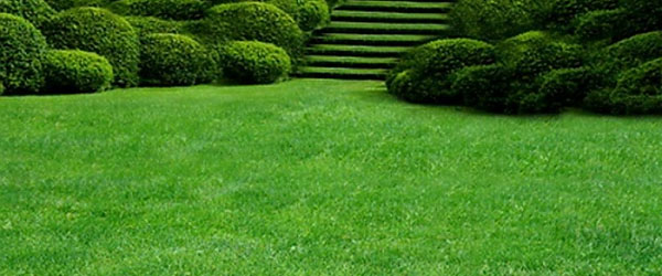 Садово парковый газон