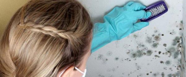 Чем обработать плесень на стенах